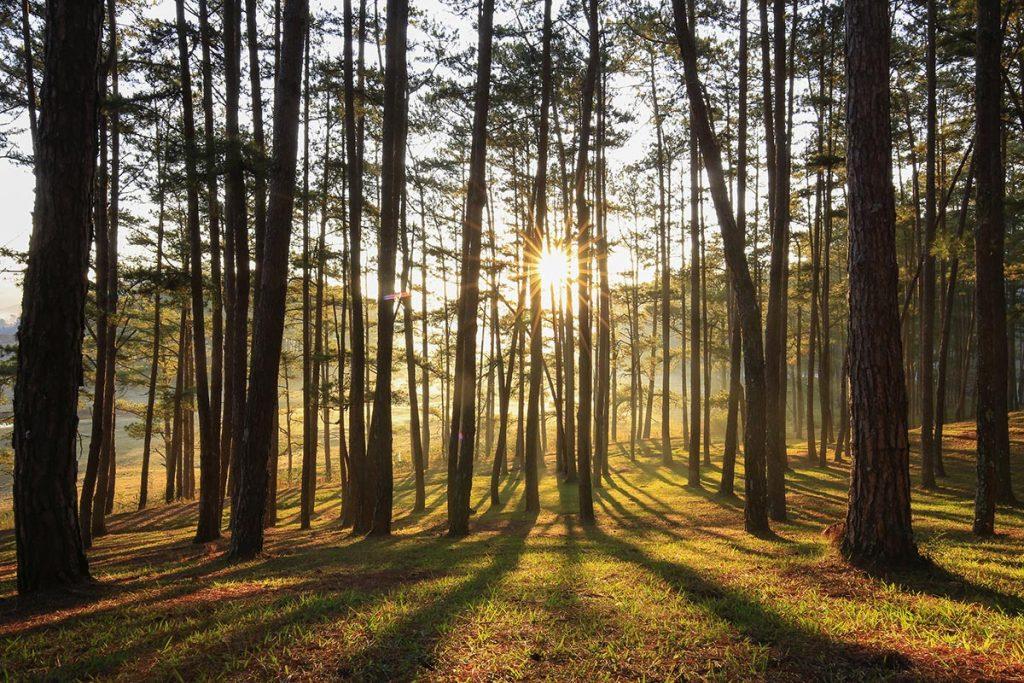 la forêt, terrain d'expression pour les utilisateurs des machines Pubert